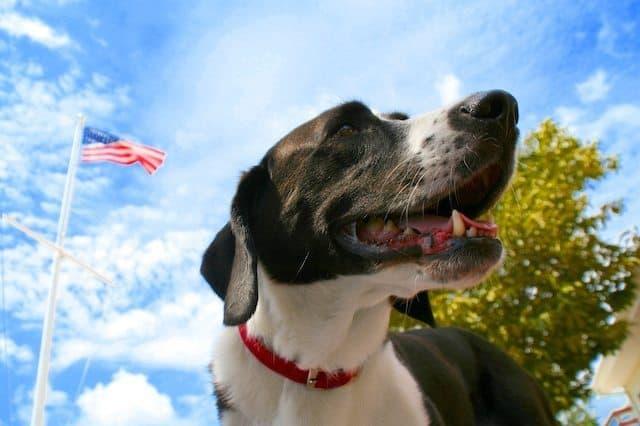 Patriotic Max