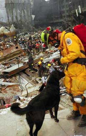 Labrador Retrievers, Golden Retrievers, German Shepherds, Collies, Rottweilers and scores of mutts provide the backbone of the search-and-rescue (SAR) operations at the World Trade Center wreckage. (Photo: Sep 15, 2001, Andrea Booher / FEMA)