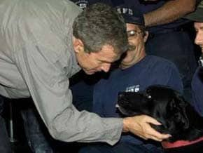 U.S. President George W. Bush greets a Black Lab searcher dog after visiting the site of the World Trade Center attack in New York City. (Photo: Sep 14, 2001, Reuters / Win McNamee)