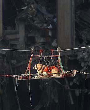 A rescue dog is transported out of the debris of the World Trade Center. (Photo: Sep 15, 2001, US Navy / Preston Keres)