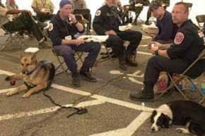 Grim faces and sad tails show the frustration—and the unshaken resolve—of rescuers from the Maryland Task Force Rescue Team on lunch break.  Handlers say that dogs trained to find survivors feel as if it's their fault for not being able to find anyone.  No survivors have been located since last Wednesday when canine search teams helped locate five injured people. (Photo: Sep 11, 2001, REUTERS / Mike Theiler)