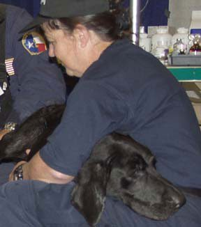 """Kinsey"" from the Texas Task Force One catches a few winks in the lap of a veterinary caretaker. (Photo: Sep 20, 2001, Mike Rieger / FEMA)"