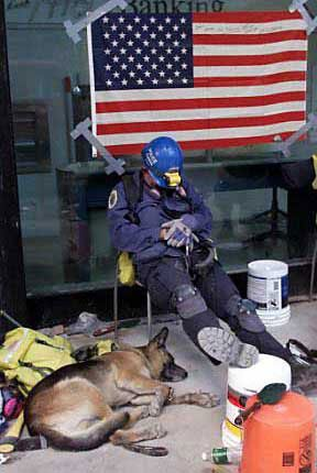 Let sleeping dogs lie (and dog-handlers, too); they certainly deserve it. (Photo: Sep 18, 2001, Reuters)