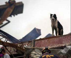 """Cowboy"", a FEMA-certified Border Collie, is one of over 350 devoted dogs who lent their superhuman senses to the search and rescue operations. (Photo: Sep 21, 2001, AP / Alan Diaz)"