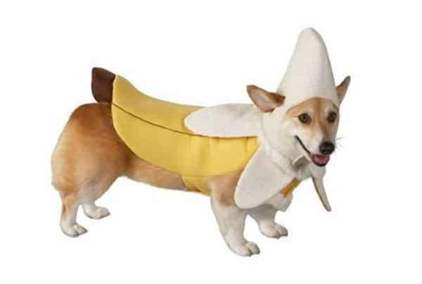 target_BananaDog  sc 1 st  Dog Files & Still Time For Doggie Halloween Costumes! - Dog Files