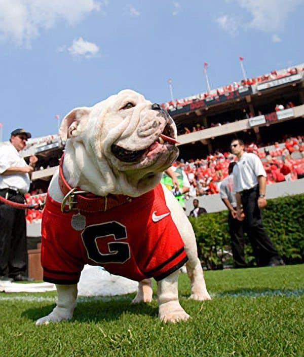 Uga-VII-on-field
