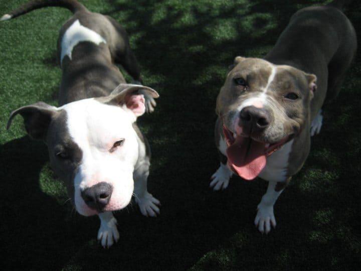 Dog Adoption Martinez Ca