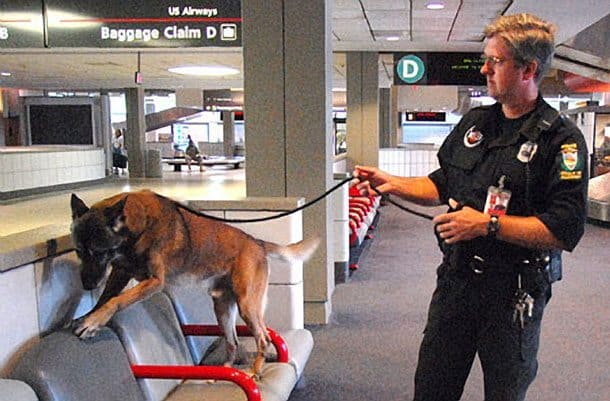 Feds Want More Bomb Sniffing Dogs To Protect Travelers
