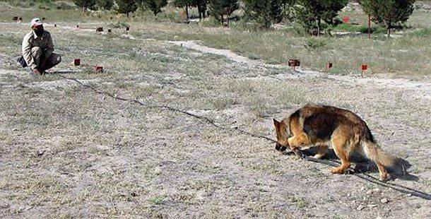 afghan war dog