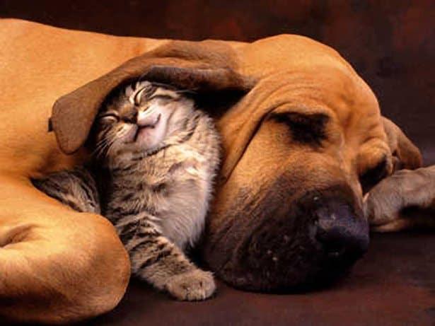 cat dog friends