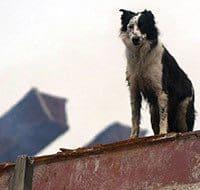 Hero Dogs Of 9/11