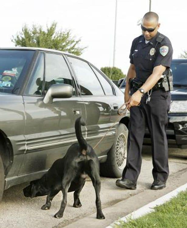 Edmond, Oklahoma Drug Dog's Finding Lead To Arrests, Suspensions At