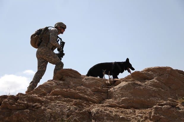 Stunning Dog Photography 9 Military Working Dogs