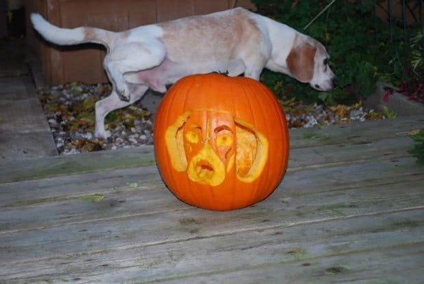 Pumpkins carved with dog stencils from files community
