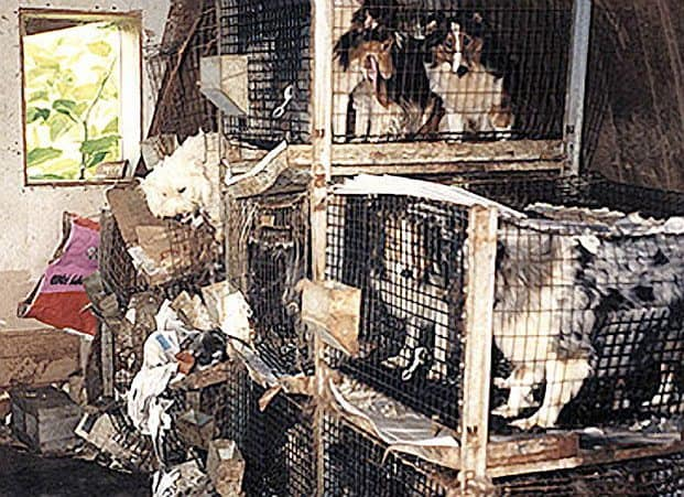 Missouri Dog Breeders Reviews