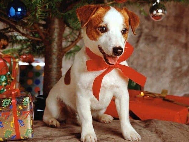 Stunning Dog Photography #21: Christmas Dogs