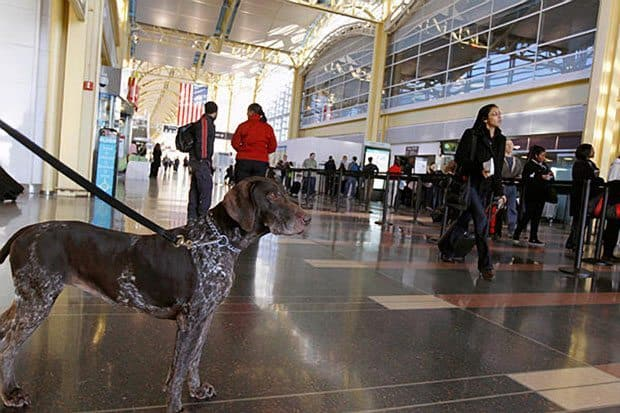 Should Tsa Let Airport Passenger Screening Go To The Dogs