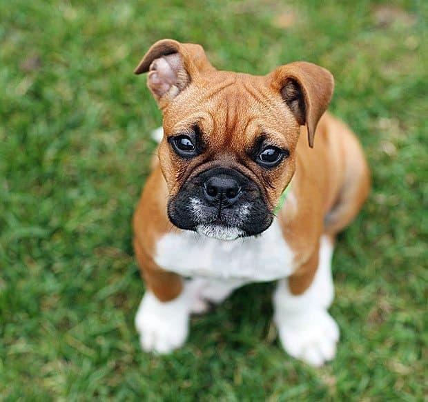 Stunning Dog Photography #26 Dog Files Community #1