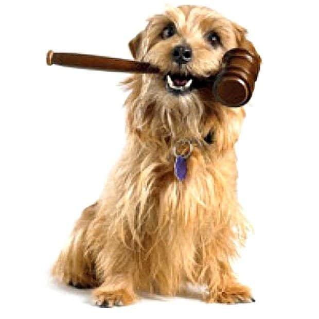 Dog Breed Specific Legislation
