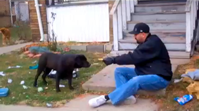 50,000 Stray Dogs Roam The Streets Of Detroit