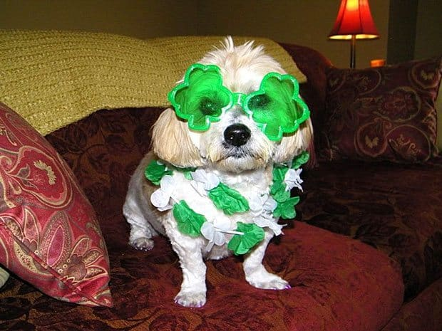 Donna with Lilly Belle go green for St. Pat's Day!