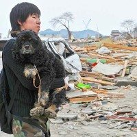 A Man and his dog walk through the wreckage