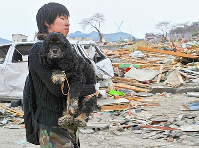 The Dog Survivers Of Japan Face Post-Tsunami Struggle