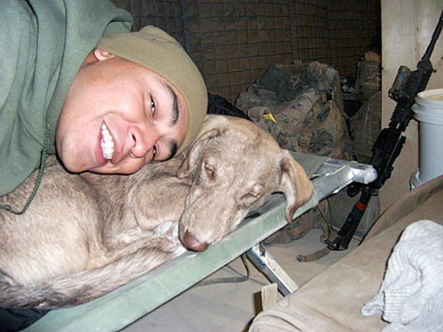 Help Bam Bam, Loving Pup And Marines Guardian In Iraq, Come Home To America!