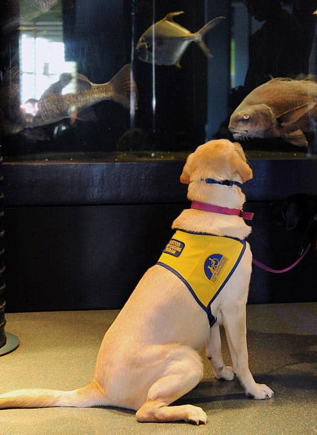 Service Dogs-In-Training Take Field Trip To Science Center In New Jersey