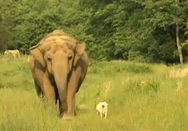 The Elephant And The Hound: Heartwarming Video