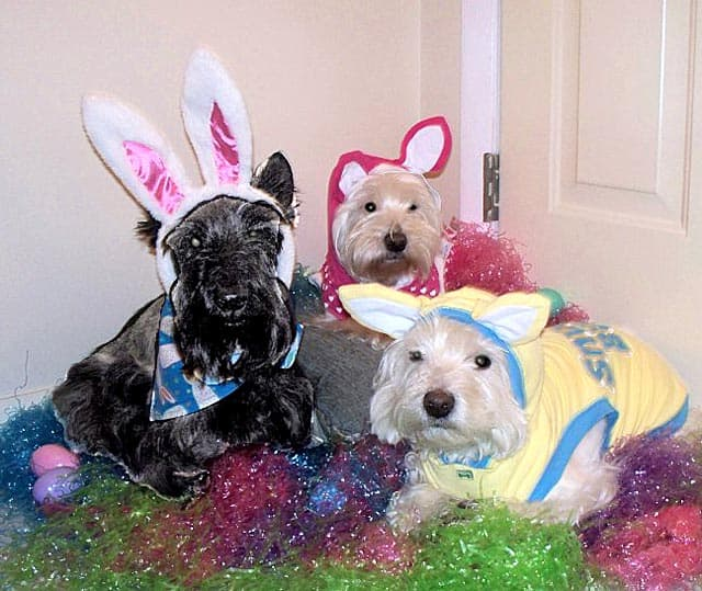 happy easter pictures funny. The Happy Easter Hounds: Fun