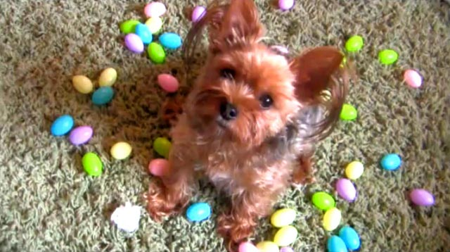 Dexter's Easter Song: Cute Video