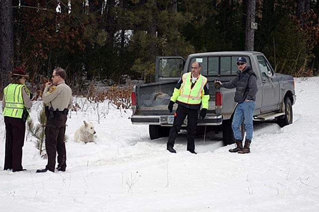 Dog Kept Vigil Over Master's Body At Crash Site