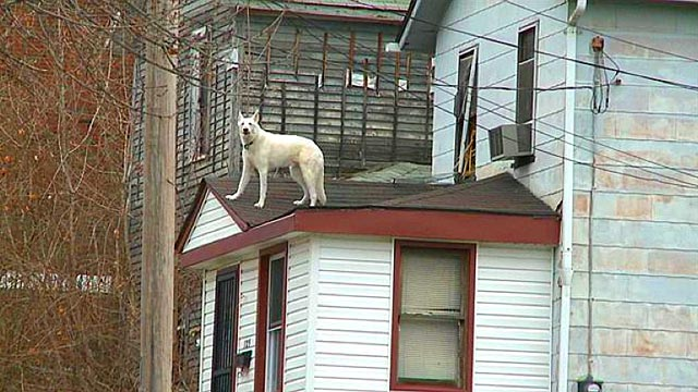Irresponsible Dog Owner Lets Dog On Roof In Youngstown, Ohio