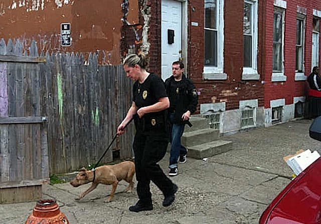 Philadelphia SPCA Breaks Up 4 Dog Fighting Rings