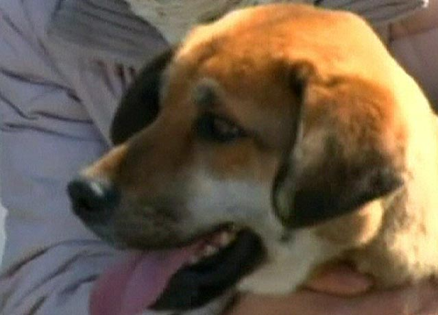 Japanese Dog Rescued At Sea Is Reunited With Owner