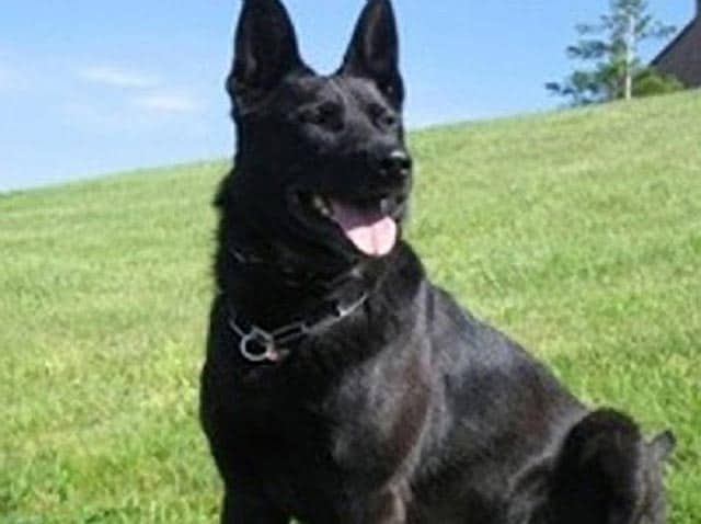 Hero Police Dog, Kane Brutally Slain In Washington State