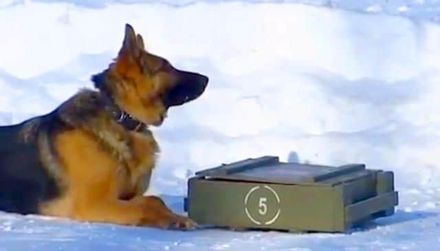 Russian Army Dogs Use Phones And Cameras To Combat Terrorism