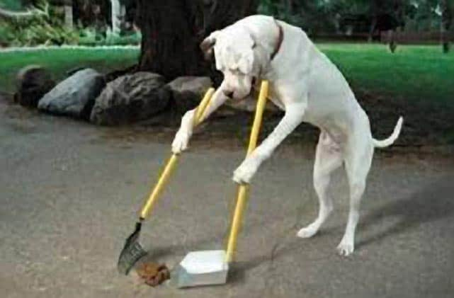 Dog Picks Up Own Poop