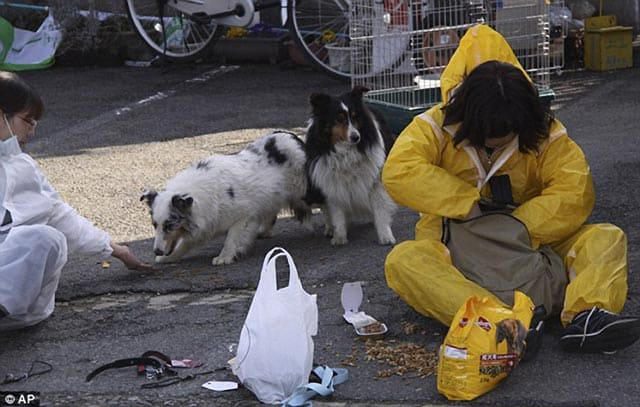 Courageous Japanese Dog Lovers Brave Nuclear Danger Zone To Save Abandoned Pets