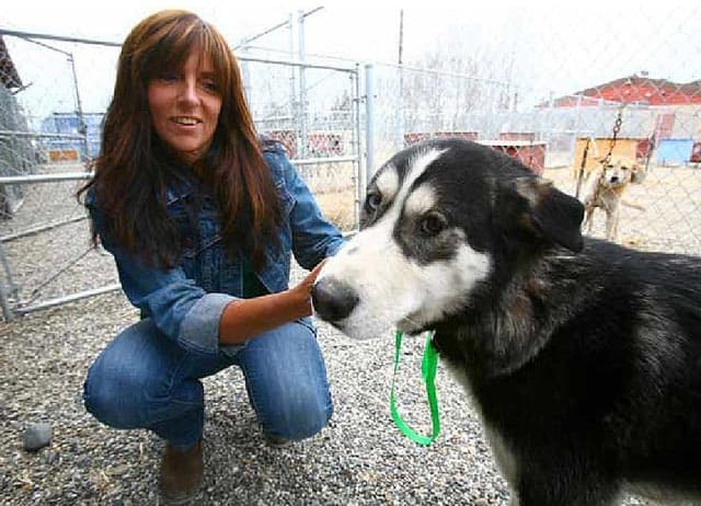 Homeless Dog Digs INTO Fairbanks, Alaska Animal Shelter