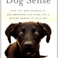 A New Book Tells Us Just How Lonely Our Dogs Are