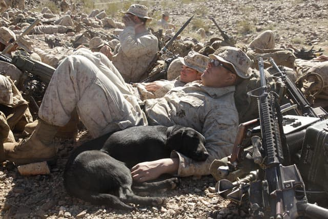 Dog Sleeps In Foxhole With Marine