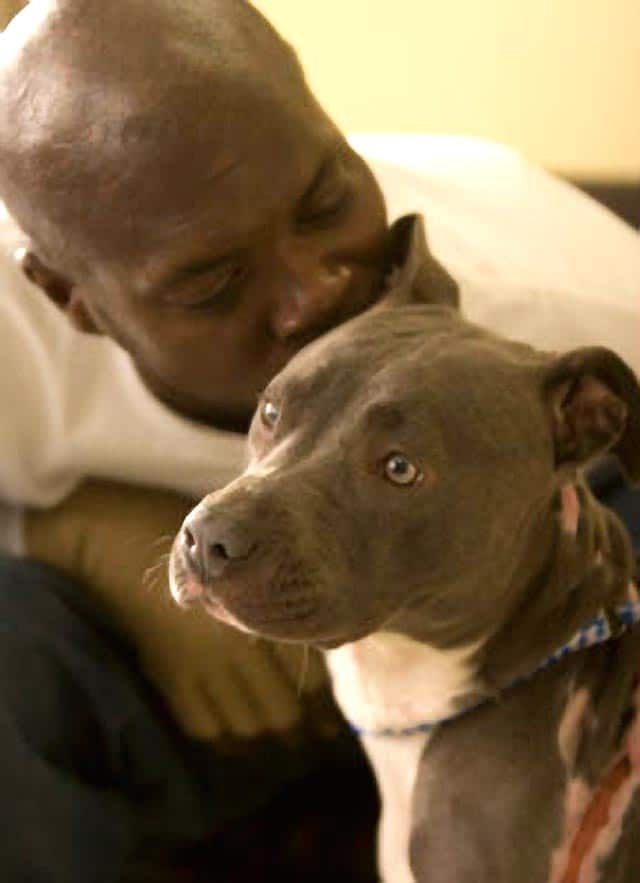Hero Pit Bull Saves Family From Fire But No Apartments Will Rent To Them