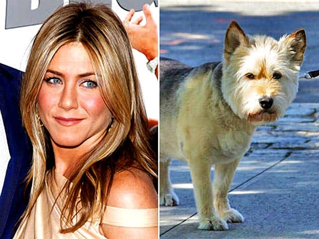 Jennifer Aniston Loses Beloved 15-Year Old Dog Norman