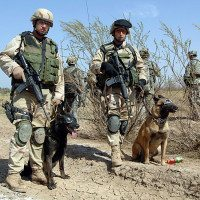 Military War Dogs on mission