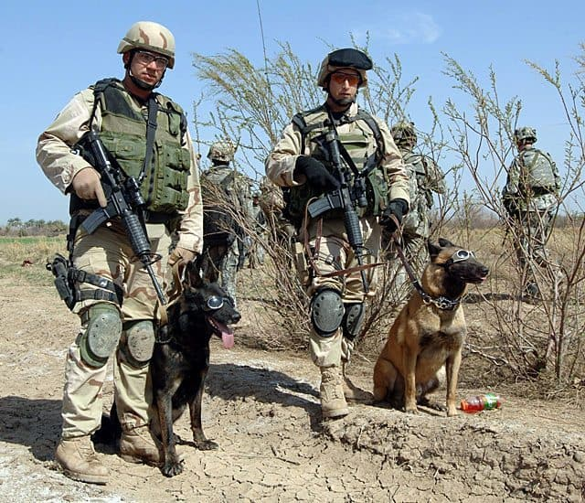 War Dog Adoption Requests On The Rise Following Bin Laden Mission