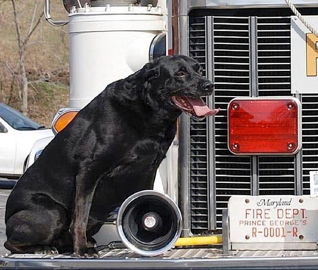 Maryland Dog Who Helped Catch Deadly Arsonist Passes Away