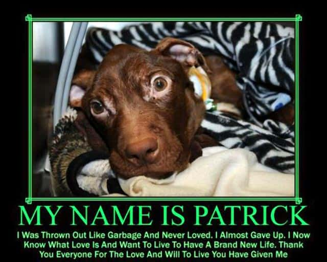 "Associated Humane Society Wants ""Miracle Dog"" Patrick Moved To Rescue Zoo"