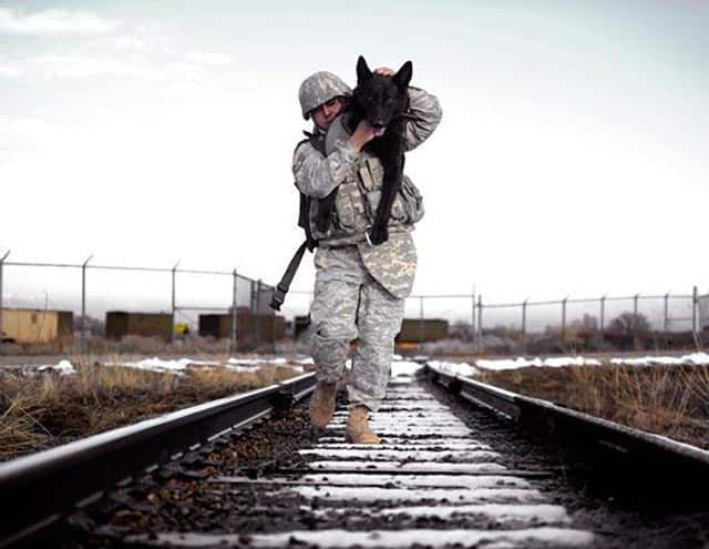 Soldier Carries Dog